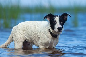 Puppy of mixed breed dog