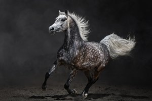 Horse gallops on dark background