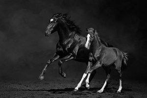 Galloping mare with foal