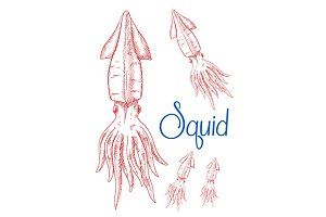 Squid sketches