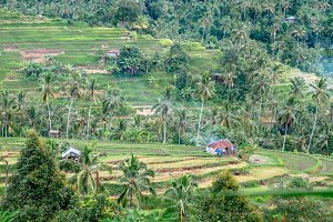 Rice Terrace fields on terrace with mountain view of Ubud region, Bali, Asia. Bali landscapes.