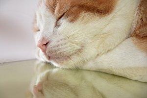 European cat resting