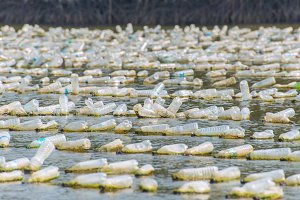 Shellfish farm from old bottles