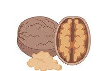 Walnut Vector Illustration