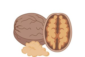 Walnut Vector Illustration