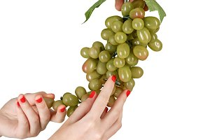 Male and female hands hold grapevine