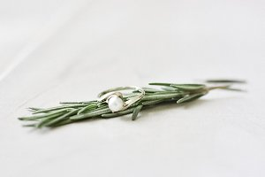 Styled Rosemary Ring Stock Image