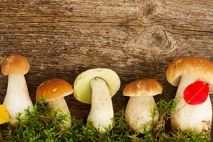 Boletus mushrooms on wooden background