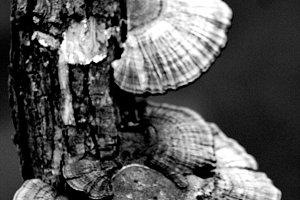 Fungus Tree