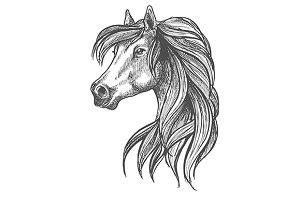 Purebred horse sketch