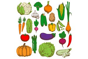 Farm fresh vegetables sketches