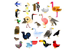 Cartoon flat icons of birds