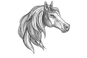 American quarter stallion horse