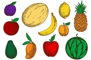 Colored fruits sketches