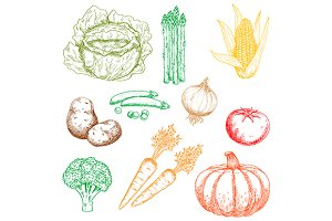 Ripe autumnal vegetables sketches
