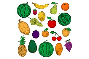 Colored sketched fruits and berries