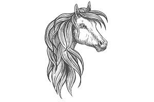 Cavalry war horse