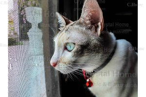 Cute cat looking outside the cage