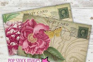 Vintage Rose & Peony Postcards PDF