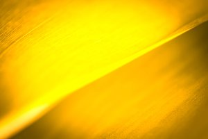 Yellow leaf background