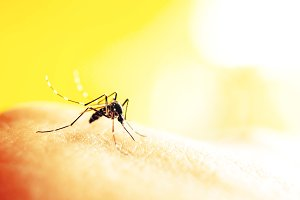 Mosquito sucking blood on human skin