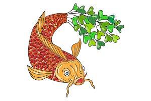 Koi Nishikigoi Carp Fish Microgreen