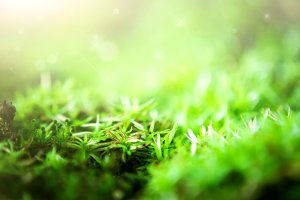 Moss and grass with green background