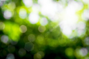 blur of nature leaf and light