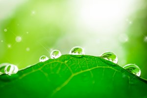 soft focus of water drop on leaf