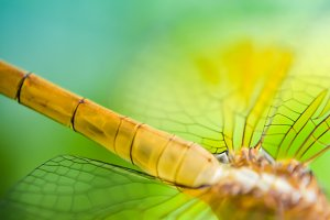 blur and soft focus of dragon fly
