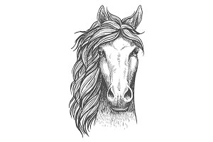 Beautiful arabian stallion sketch