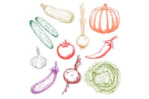 Colored sketches of farm vegetables