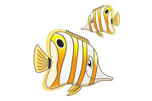Funny copperband butterflyfish