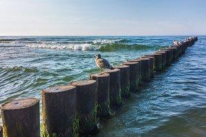 abandoned seagull