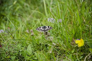 Butterfly in the green Grass