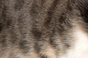 cat's fur texture