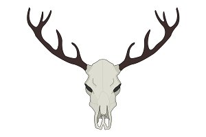 Deer skull illustration. Vector