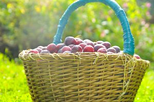 basket full of plums on autumn grass