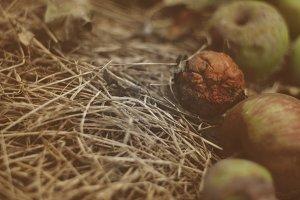 Dry apple