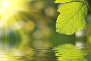 Fresh green leaf highlighted by sun.