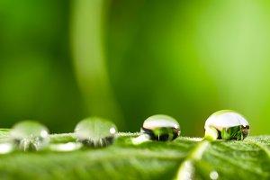 water drops on fresh green leaf