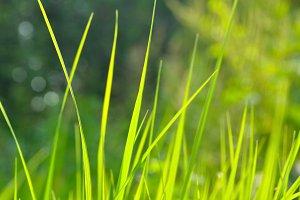 green grass blades, shallow depth of field