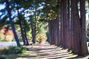 Majestic Trees: Digital Background