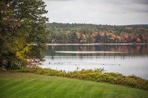 Ducks in Pond: Digital Background