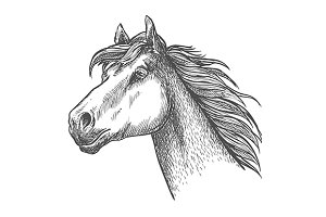 Sketch of powerful horse head