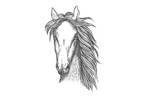 Great horse head sketch