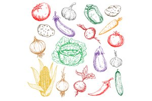 Fresh farm vegetables sketches set