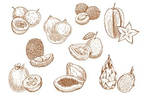 Exotic fruits sketches set