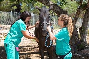 Veterinary horses on the farm