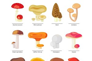Vector mushrooms icons